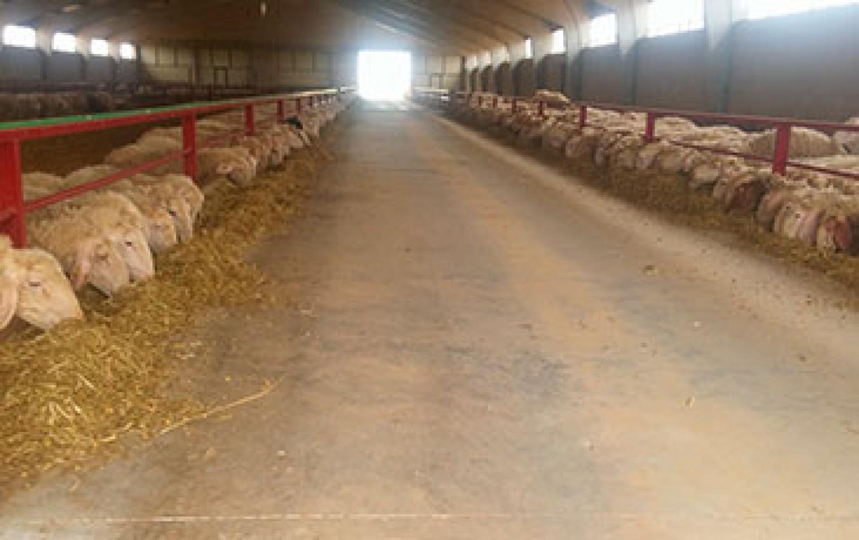 Ejecución de Naves Ganaderas, tanto de ovino, caprino, vacuno…